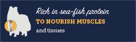 AAA Rich in sea-fish protein medium title=